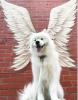 Les anges ont 4 pattes.