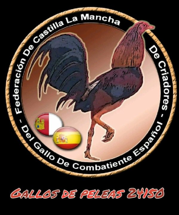1 coq et 2 poule de chez moi bagué (gallos de peleas 24150) vendu à des fidèles garçon d'Angoulême