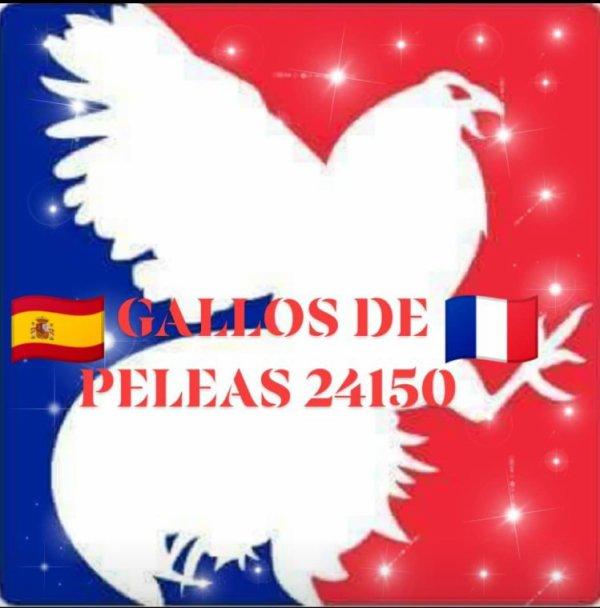 Nouveau logo : GALLOS DE PELEAS 24150