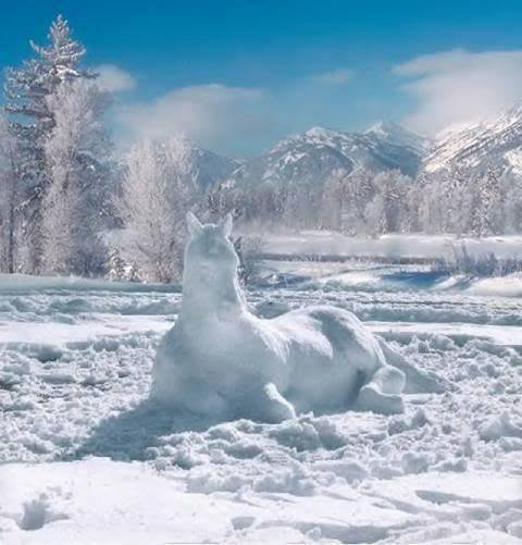 cheval des neige
