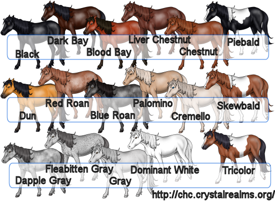 les robes des chevaux 2