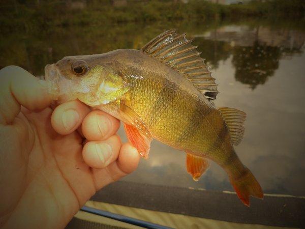 quelque poisson de septembre à décembre !!!