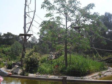 Île extérieur des singes hurleurs