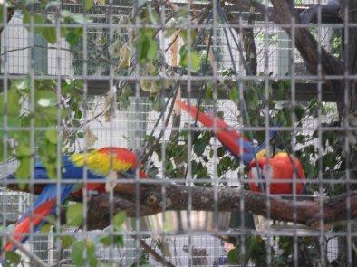 Volière perroquets