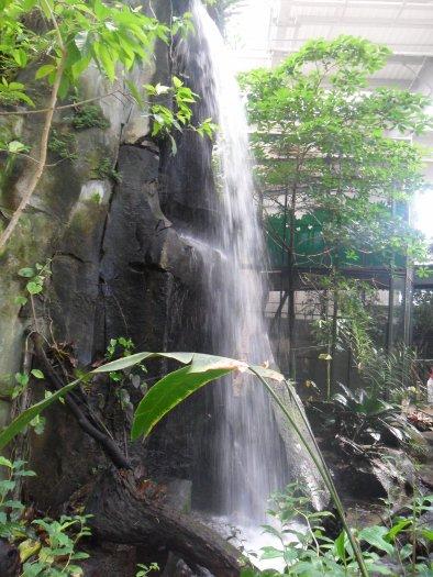 Serre amazonienne partie 2