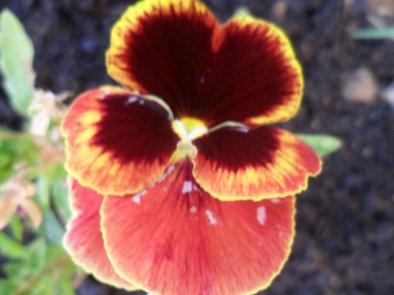 Photos de mon jardin
