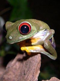 Visite nocturne de la serre Amazonienne