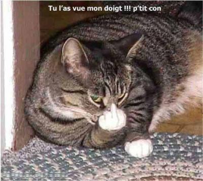 Le Doigt D Honneur Du Chat Humour Du 82