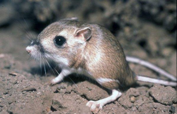 Les plus belles espèces menacées