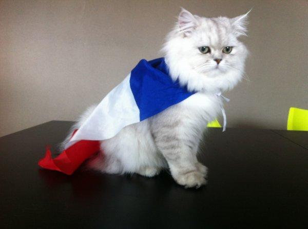 Google au couleur de la France