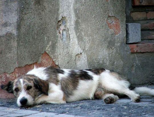 Euro 2012 : l'Ukraine extermine les animaux sans-abri.