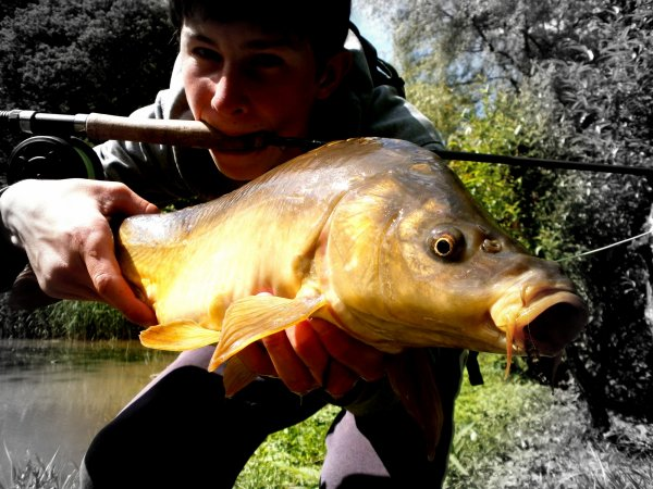 Carpe in fly fishing