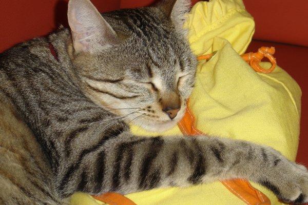 Concour de chat! Miaou <3