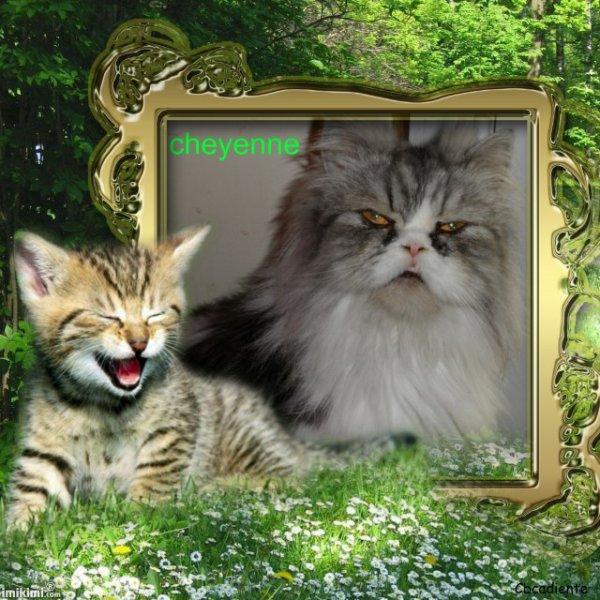 je vous presente la maman cheyenne et la fille tigresse