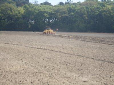semer le maïs