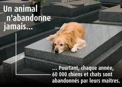 ~ Un animal ne pleure pas ... Il souffre en silence ~