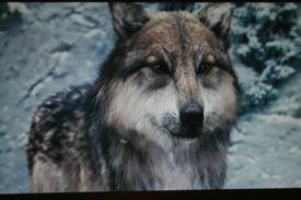 Jason en loup