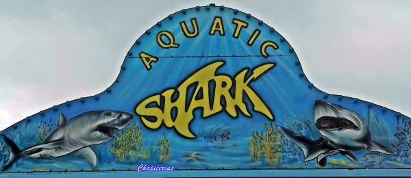 G3689 - AQUATIC SHARK A TOURS-LA RICHE.