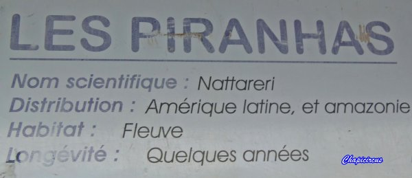 G3697 - AQUATIC SHARK A TOURS-LA RICHE.