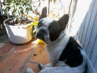 mon chien bambou