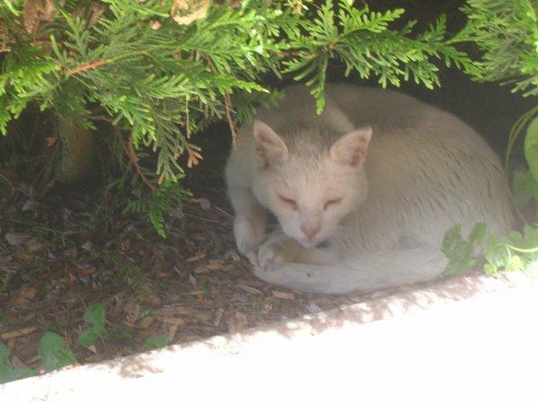 Le chat blanc toujours pas de nom ne quitte plus for Adaptation chat nouvelle maison