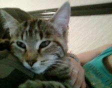 mon premier chat