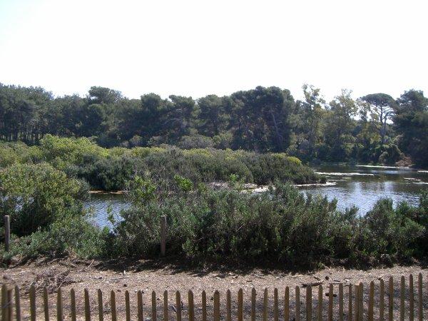 L'étang du Batéguier