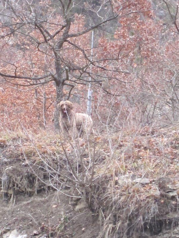 Clara, la petite chienne chercheuse de truffes