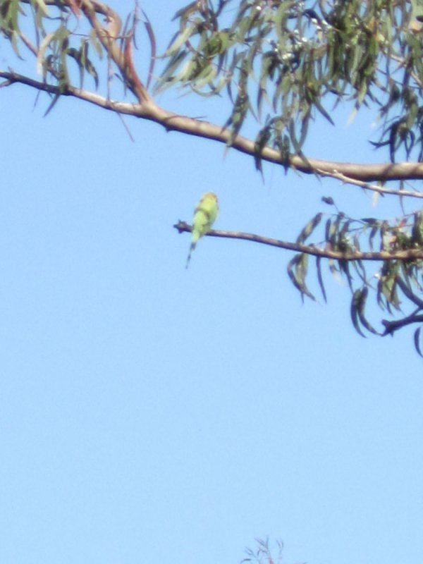 Nous avons été raccompagnés par un oiseau chanteur