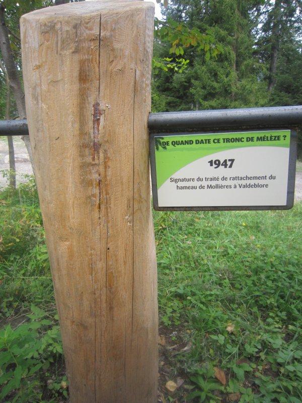 Quand la forêt raconte l'histoire