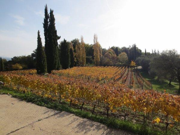 Sous la conduite de M. Rasse, intarrissable sur le vin : visite de la cave et dégustation