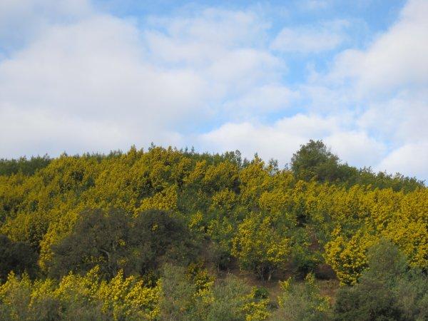 Par la route d'Or de Pégomas à Tanneron