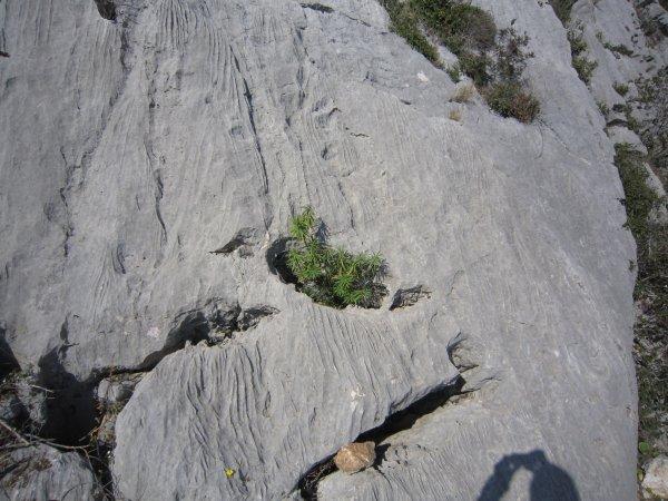 Sentier Friedrich-Nietzsche