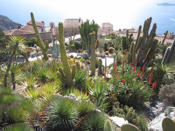Jardin exotique d'Eze