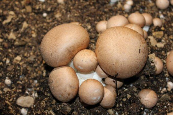 M. Boselli, les champignons et les endives...