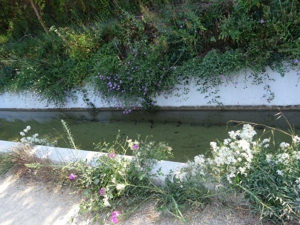 Canal de la Siagne