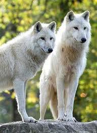 ils sont magnifique *-*