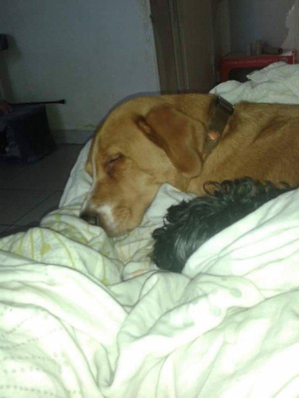 Mon flis Kenzo le chien noir  tanie lautre chien
