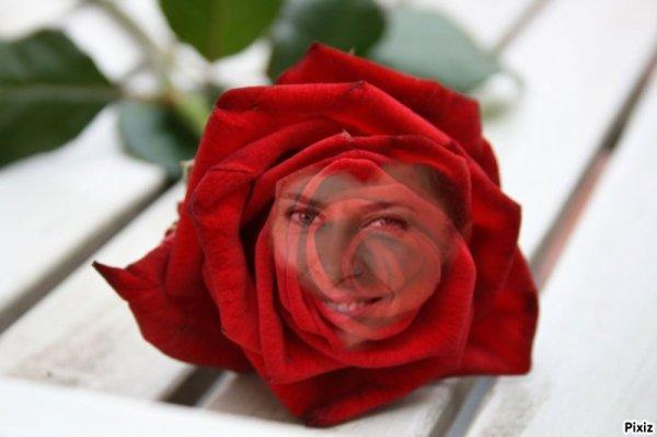 L@ plus belle de toute les rose