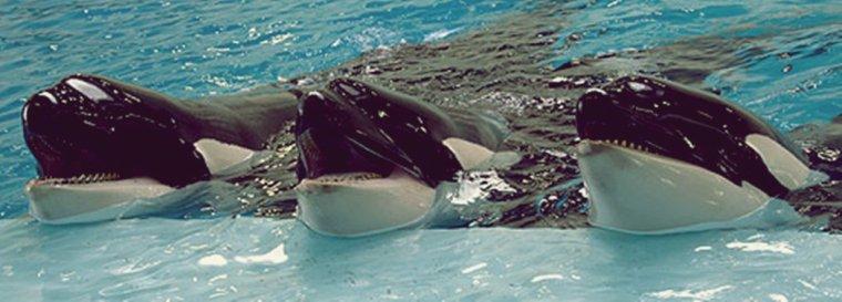 Port of Nagoya Aquarium, Japan . ❤