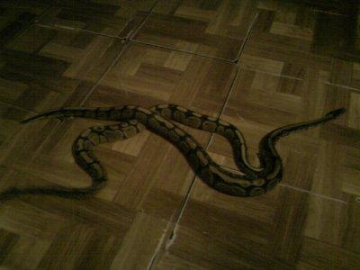 mes deux python royal