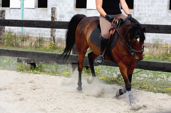 La force du cheval réside dans le rythme de ses foulées.