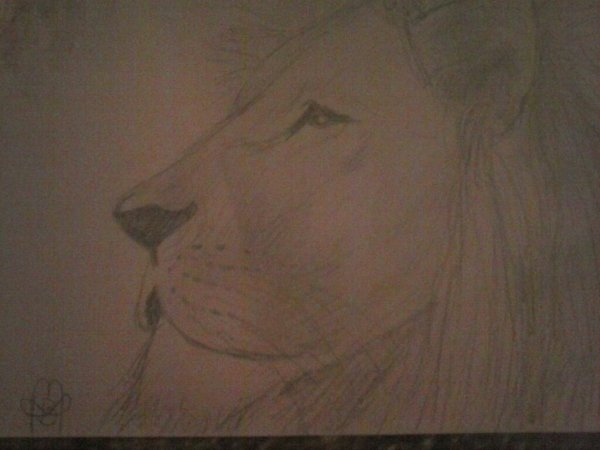Inclassale 3 : Contre les animaux sauvages dans les cirques. Signez la pétition.