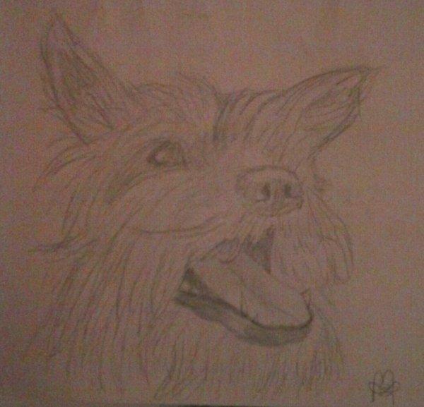 Hors sujet 2 : Mon chien.