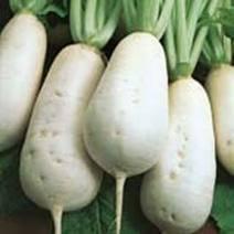 les légumes suite 1