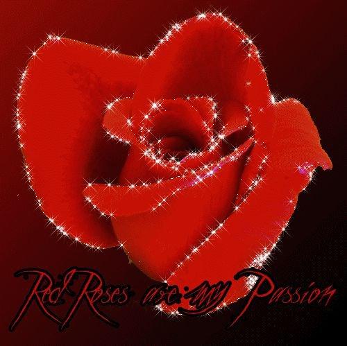 Dites le avec une Rose, bonne après midi. Bisoussssssss mes adorables amies