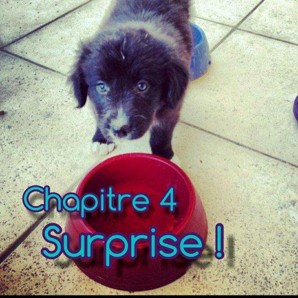Chapitre 4 : Surprise !