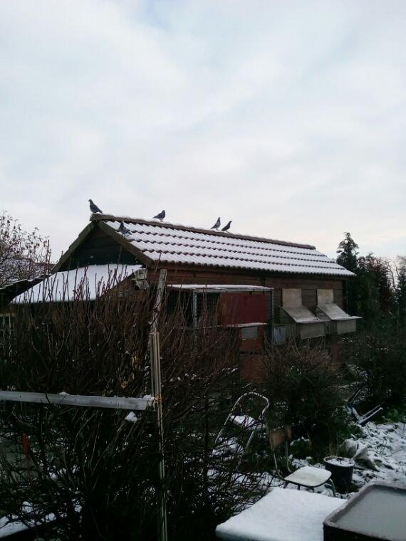 Il a neige !!