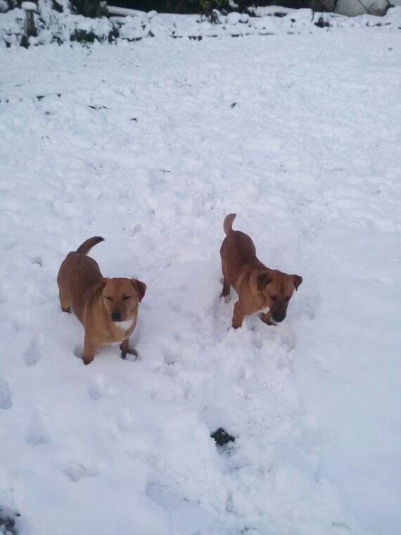 Il neige !!!