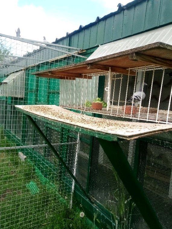 Faut pas nourrir les pigeons !!!!